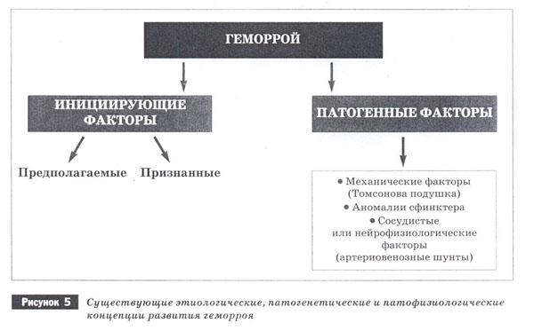 Существующая теория этиопатогенеза геморроя